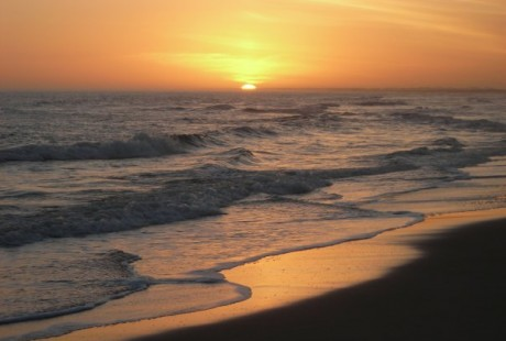 Paloma-Playa